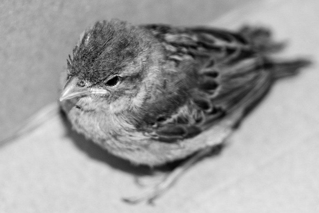 Cpt (w) Sparrow